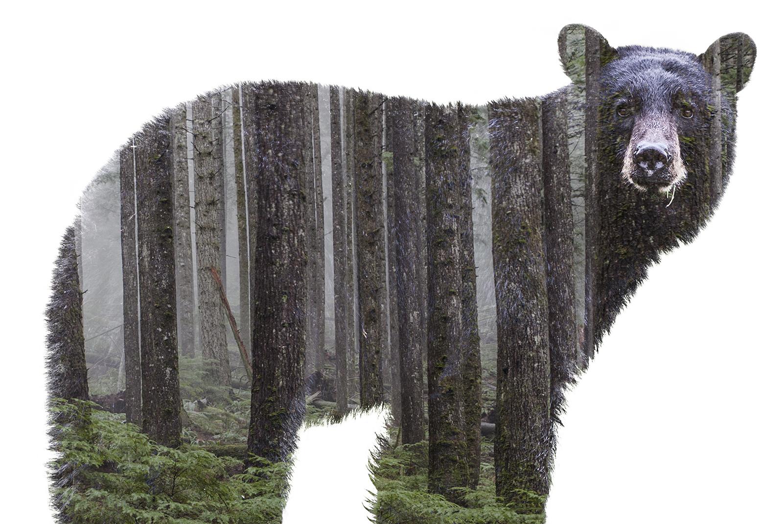 fauna bear.jpg