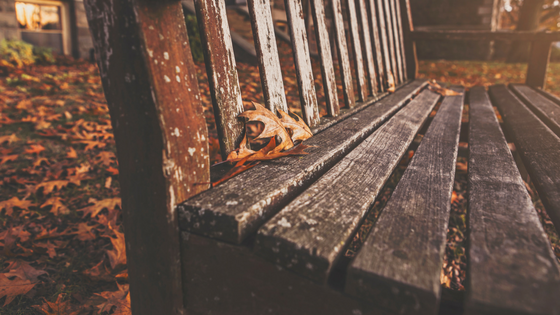 autumn moments.png