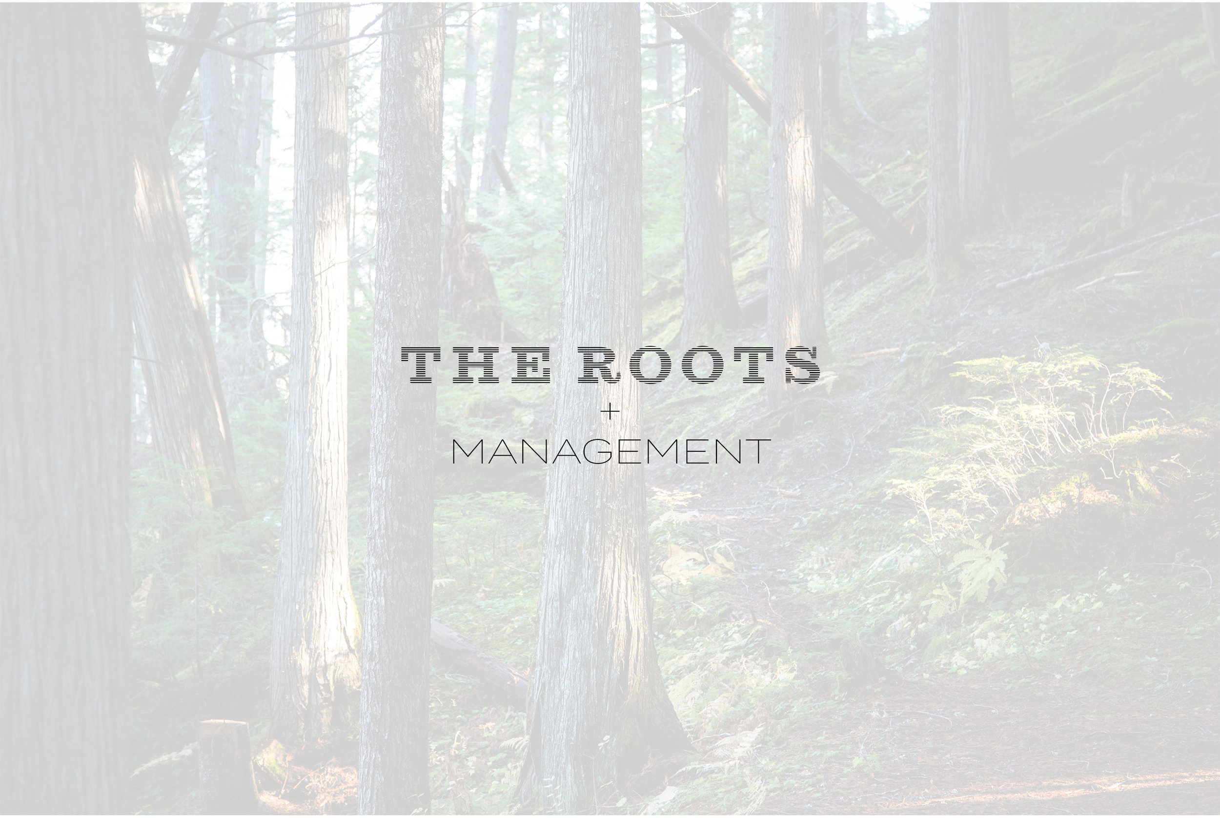 Roots+Management.jpg