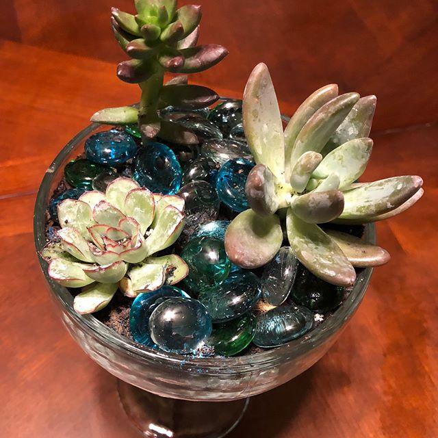 """Fun night creating """"wine glass succulents"""" mini-terrarium at the Skowhegan Library this evening. (Or in my case, """"margarita glass"""" terrarium!) 😉"""