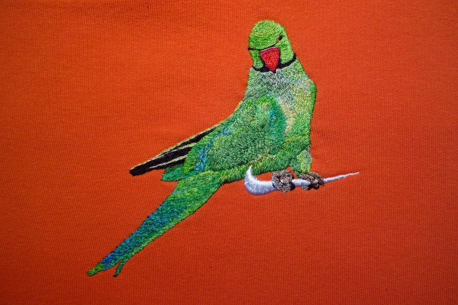 Nike\Ring-Necked Parakeet\ jtmerry.com