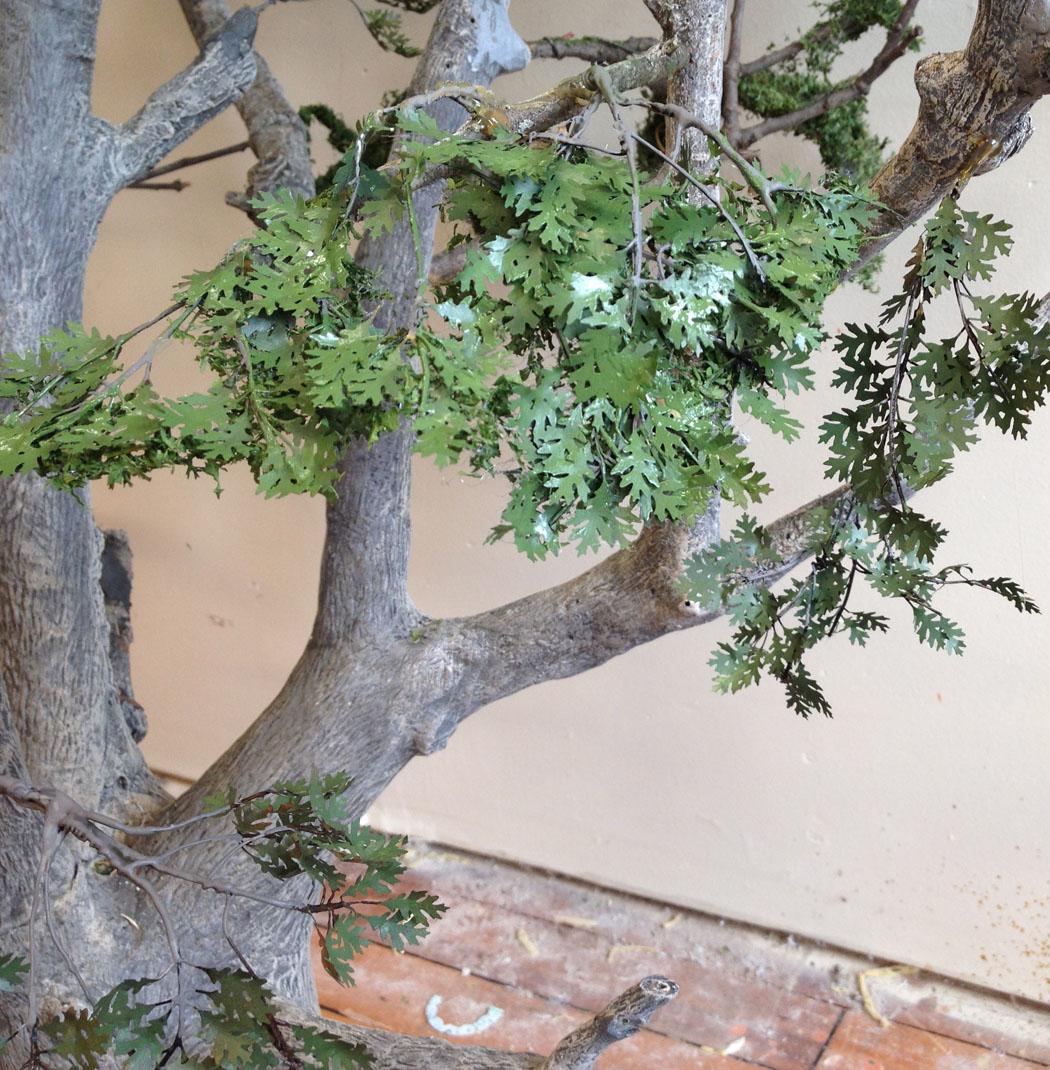 miniature oak tree