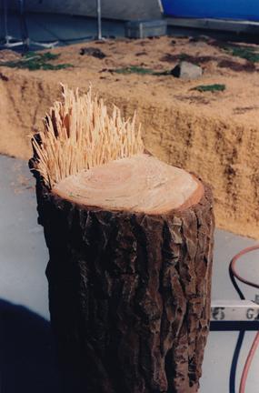 SNL tree stump