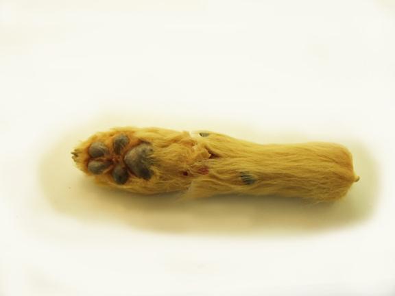dog paw with jagged seam