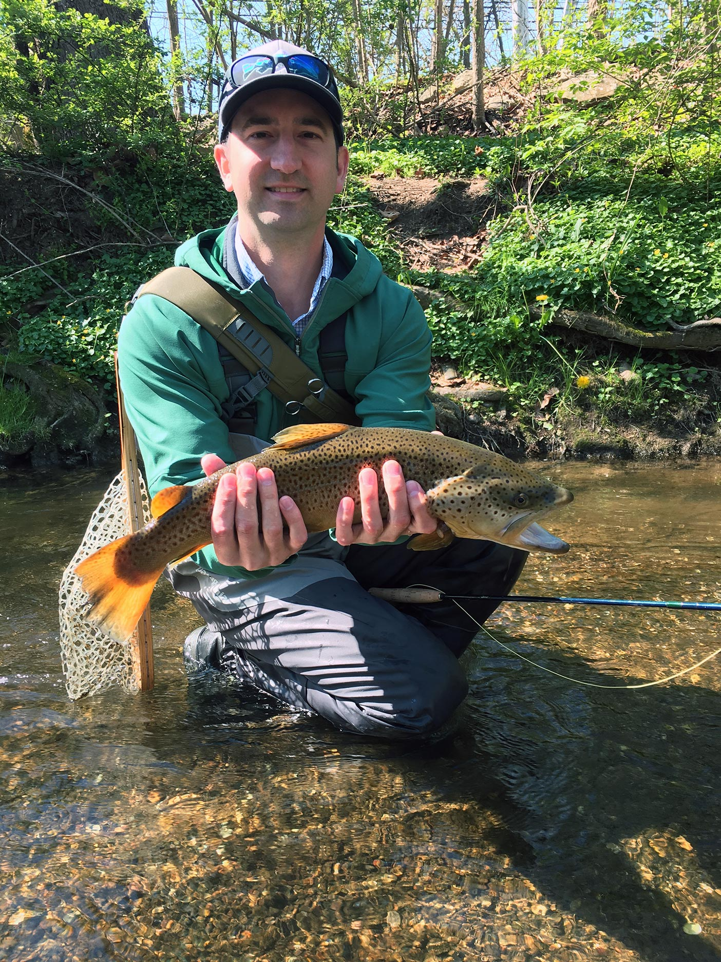 """The 22"""" Tulpehocken Brown Trout I caught in late April 2016."""