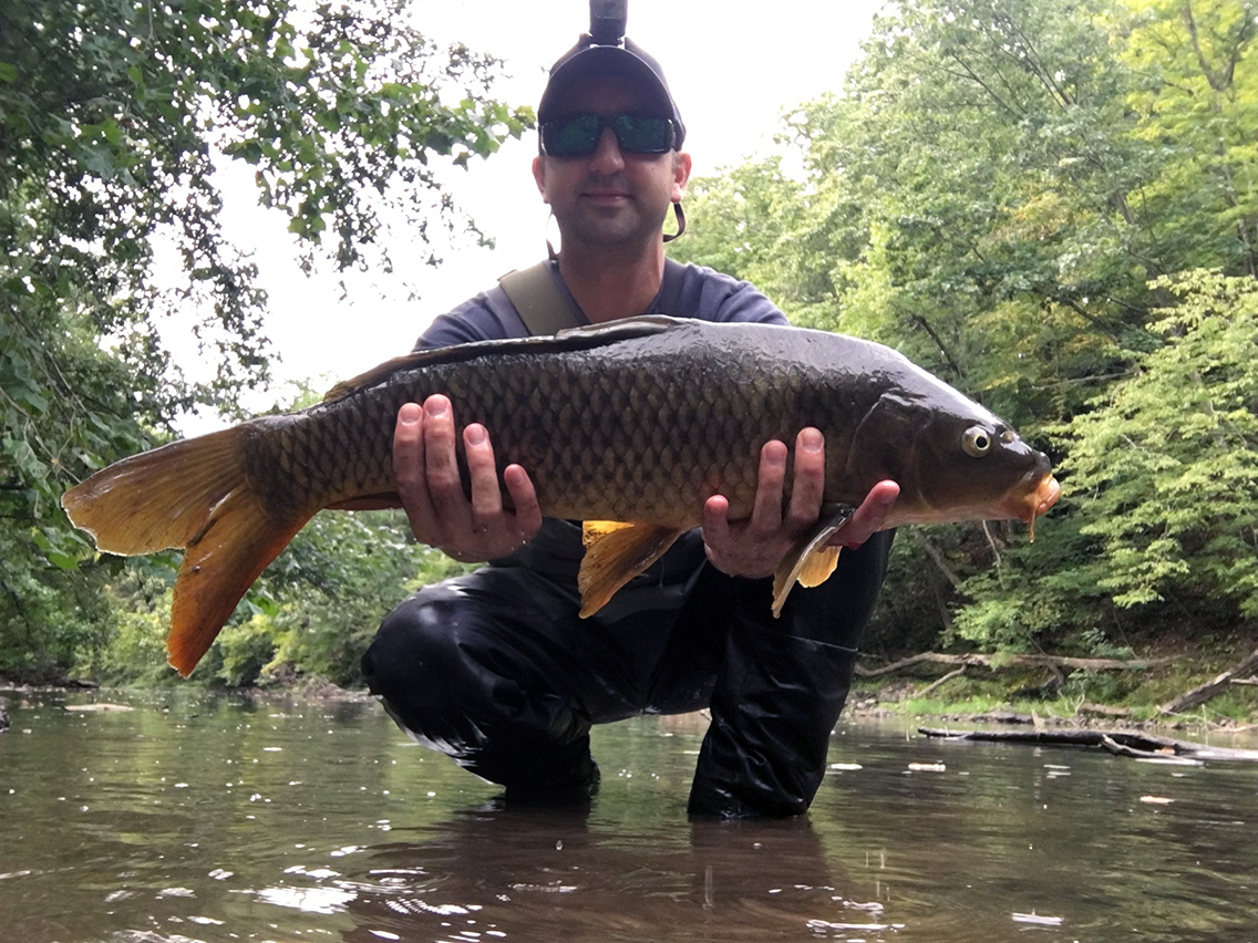 One of the carp I landed at the fallen tree.