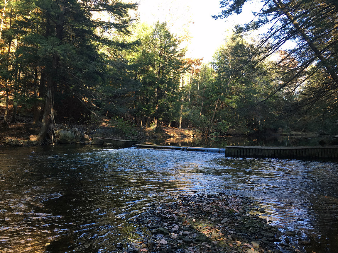 Looking upstream at one of the many runs on the Yellow Creek Trout Club water.