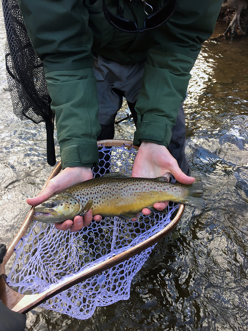 """My first ever lake-run brown trout on a fly rod, but not the 30"""" giant I'm after."""