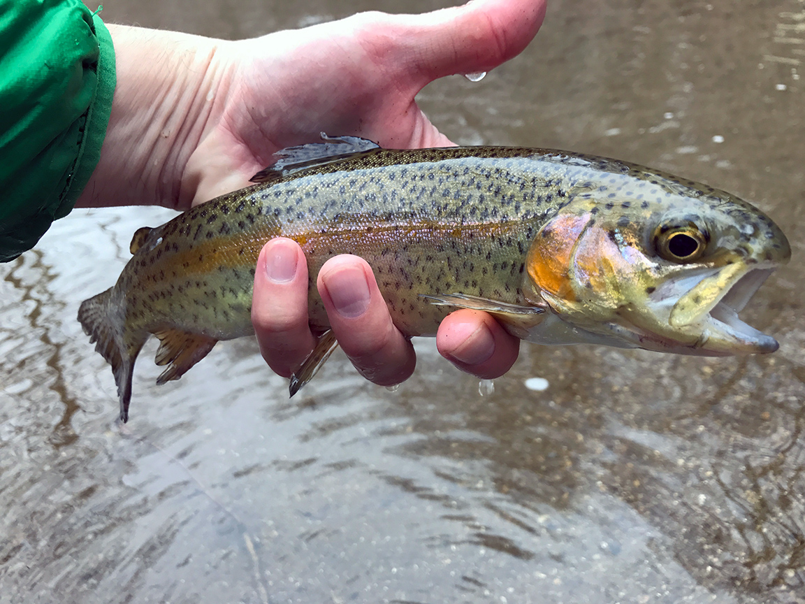Another state stocked White Clay rainbow trout.