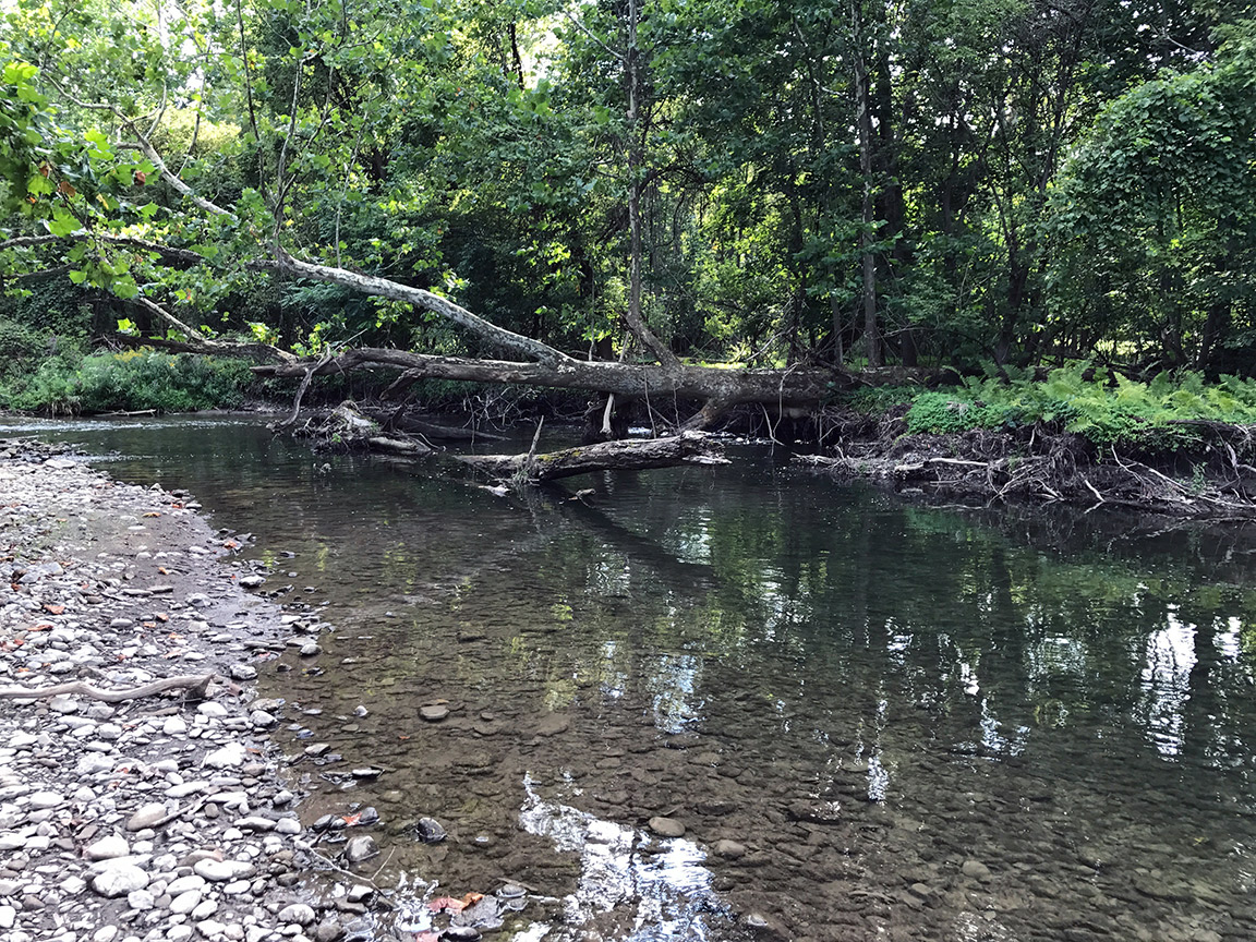 The Catch & Release Only section of the Chittenango where I witnessed many rises.