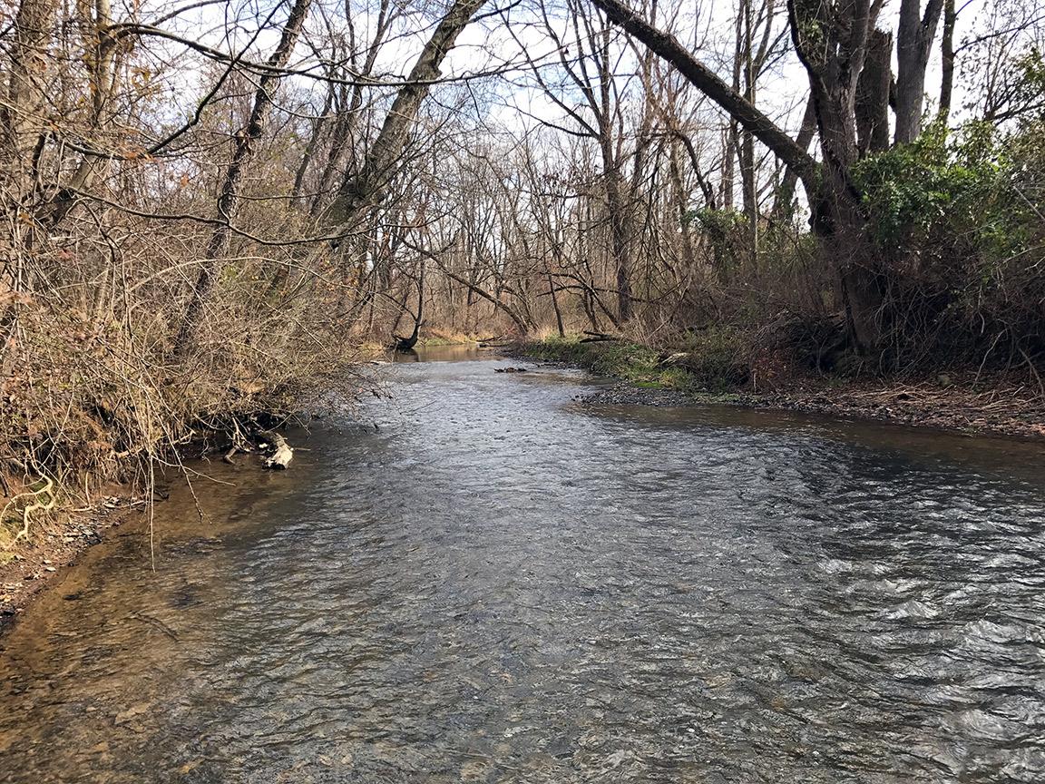 Looking upstream on Codorus Creek just below the Brown Road access.