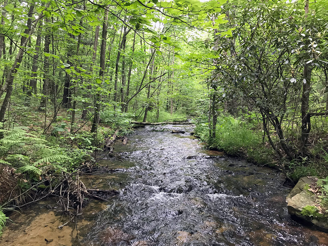 My first view of Tomtit Run in Centre County, Pennsylvania.