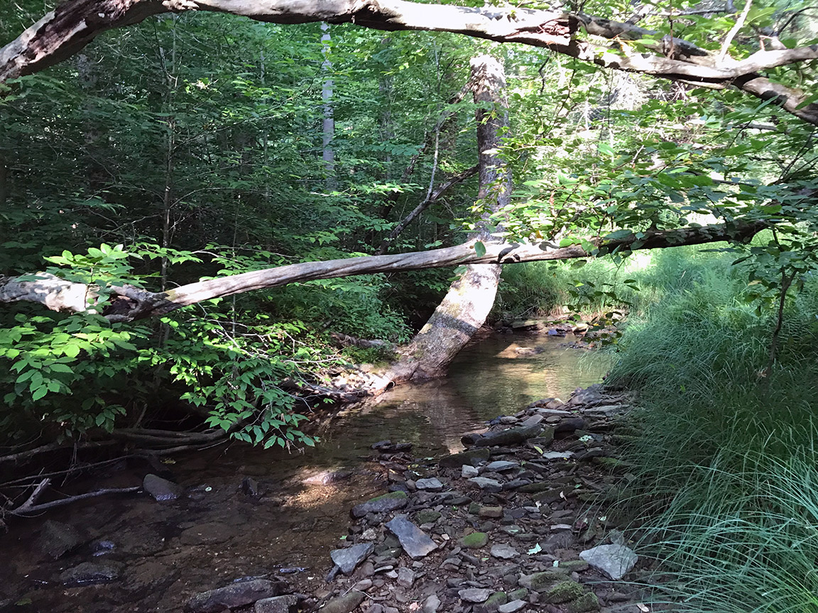 The first spot I cast my fly line on Cherry Run.