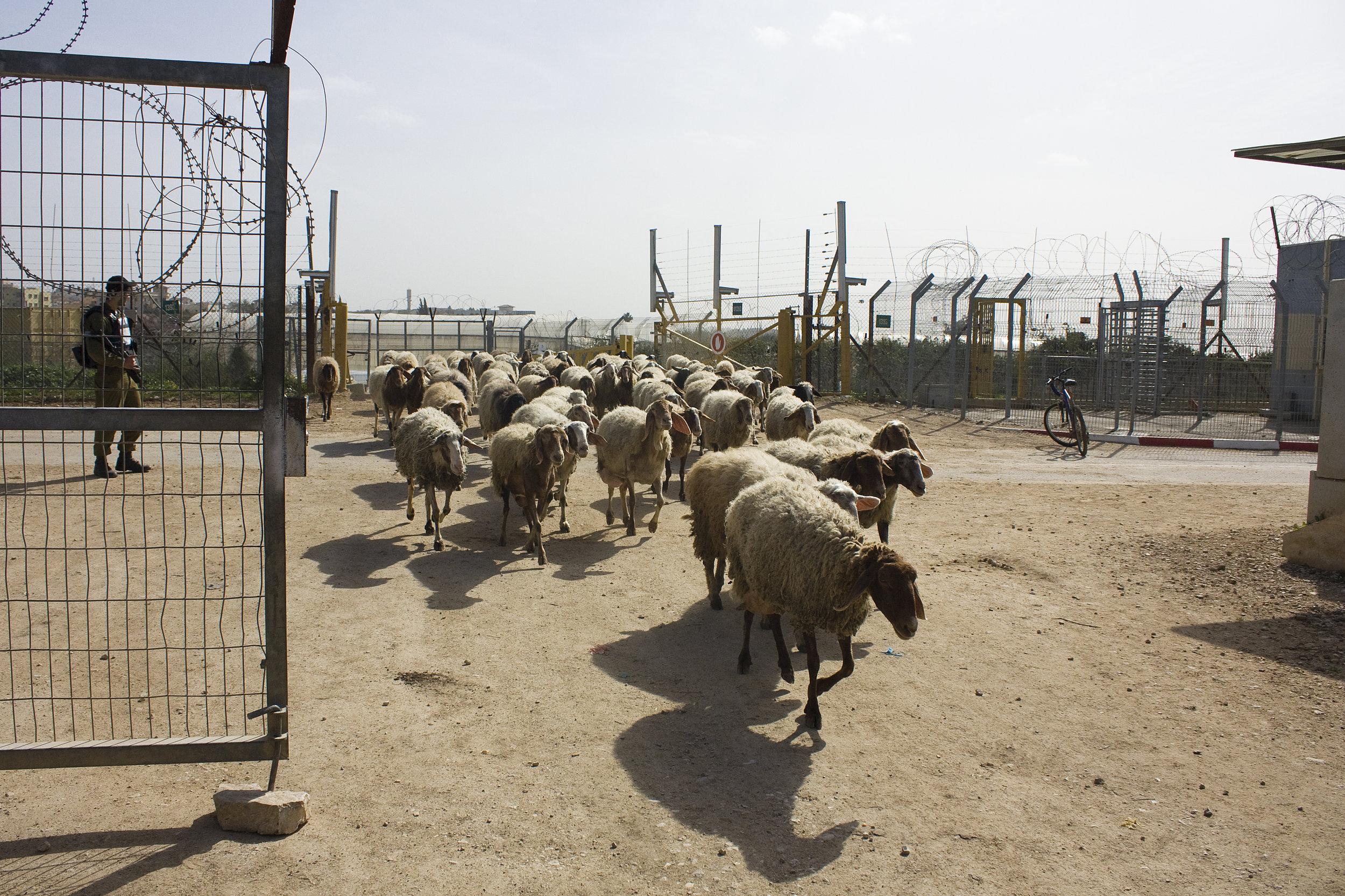 Qalandia rural checkpoint
