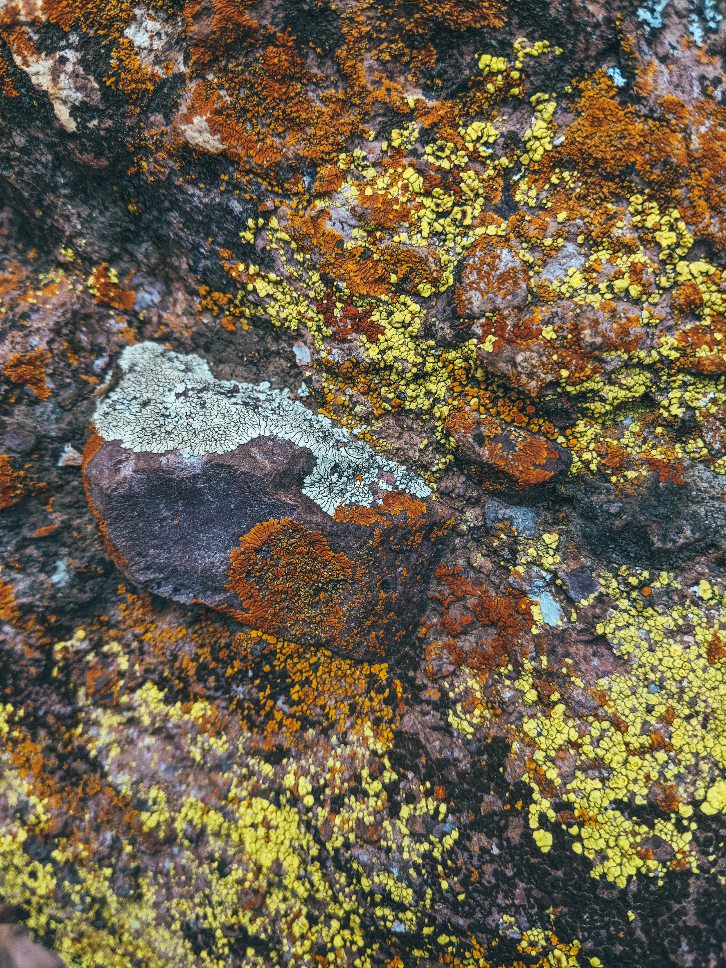 The lichen (I think)
