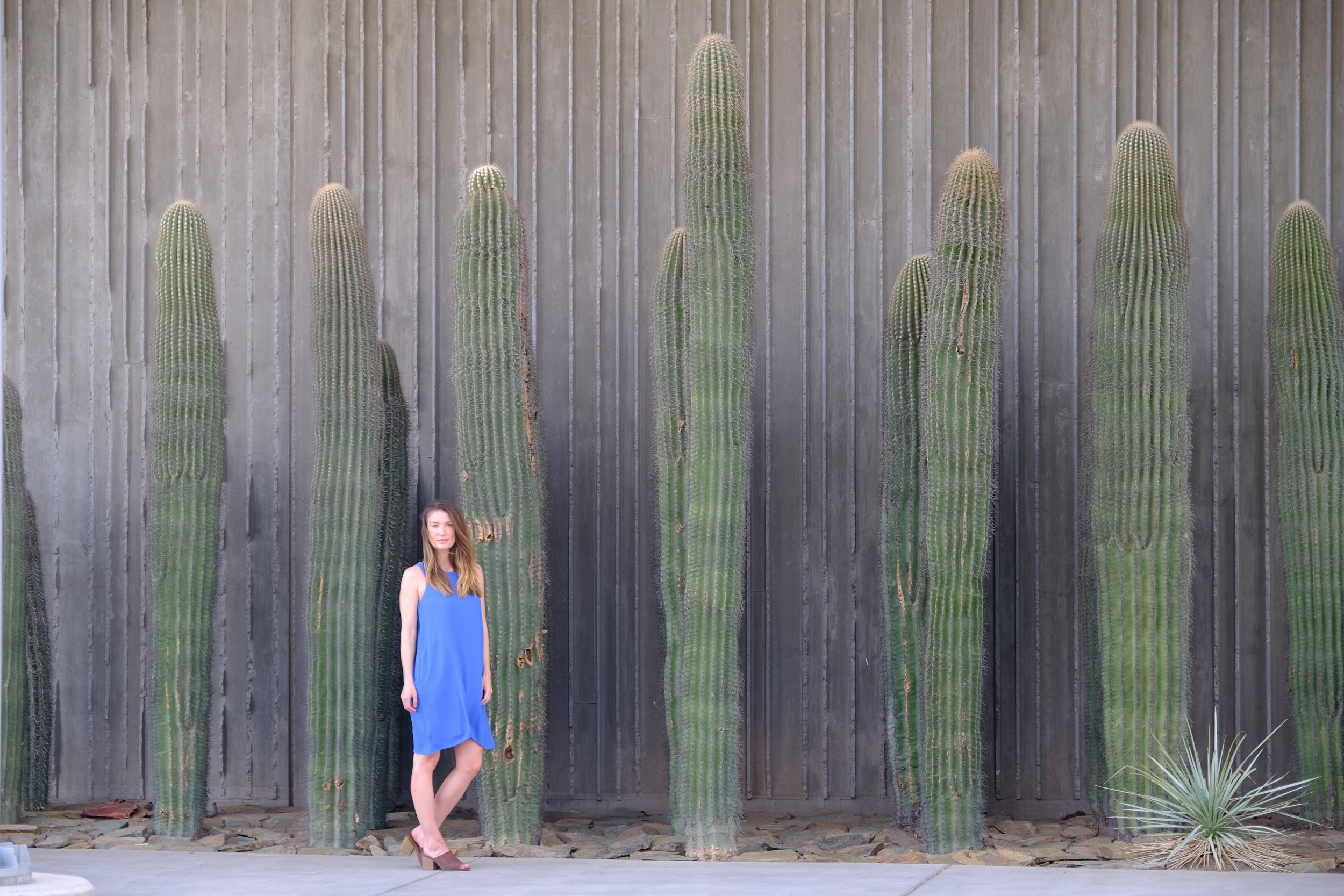 I could not get over these cactuses, I want them in my backyard but I'm not sure they'd thrive in the Bay Area. Also we don't have a back yard.