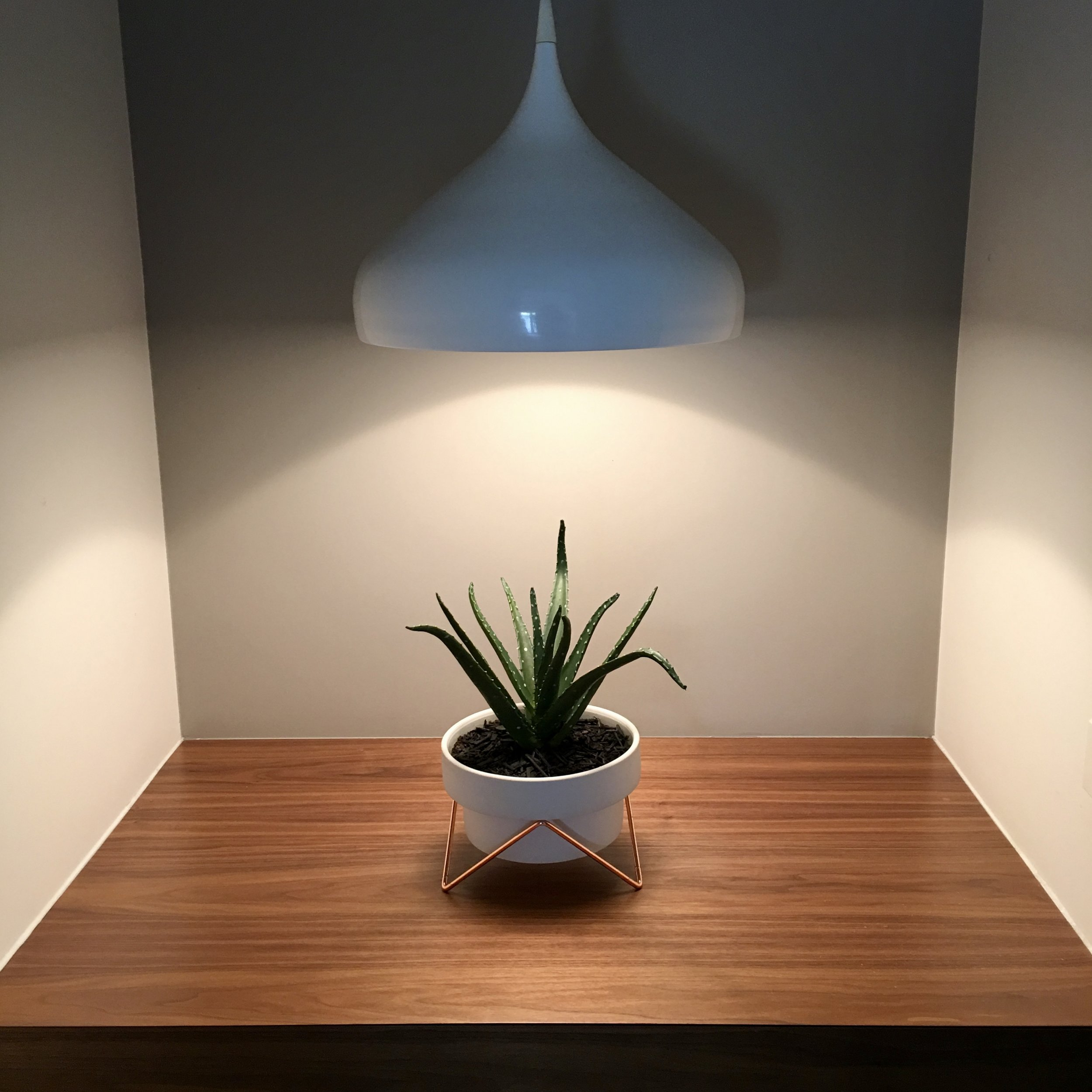 It's not just about the Botanics - We place just as much importance on selecting the right accessories because after all, it's about making plants a design feature. With a strong focus on contemporary styling, all our pots & stands are sourced from manufacturers that adopt a clean & minimal design philosophy that works beautifully in contemporary urban interiors.