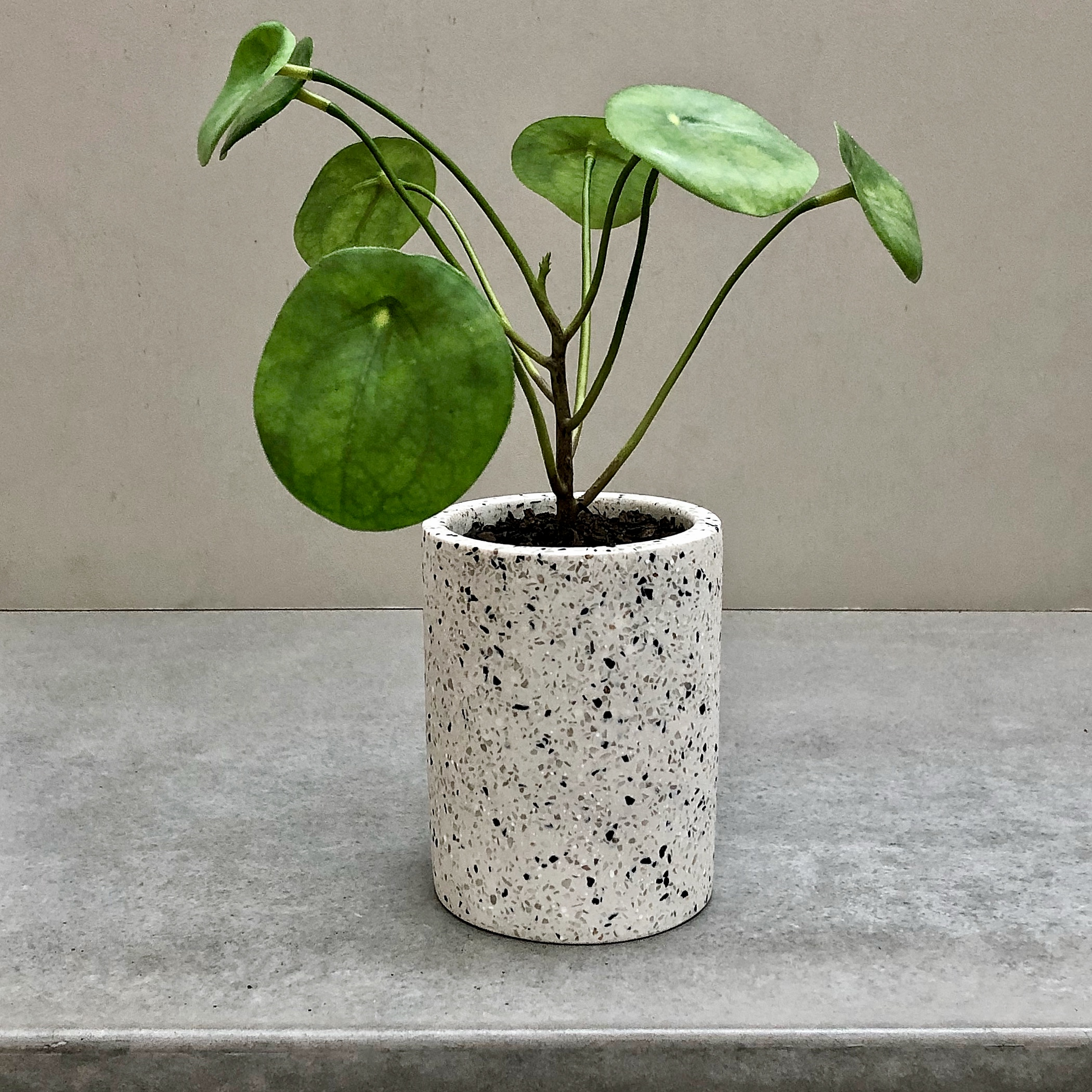 The Ideal Gift - Stuck on ideas for a gift ? Our range of potted faux plants make the ideal present for any occasion; house warming, wedding/engagement, newborn parents, birthday, anniversary just to name a few.