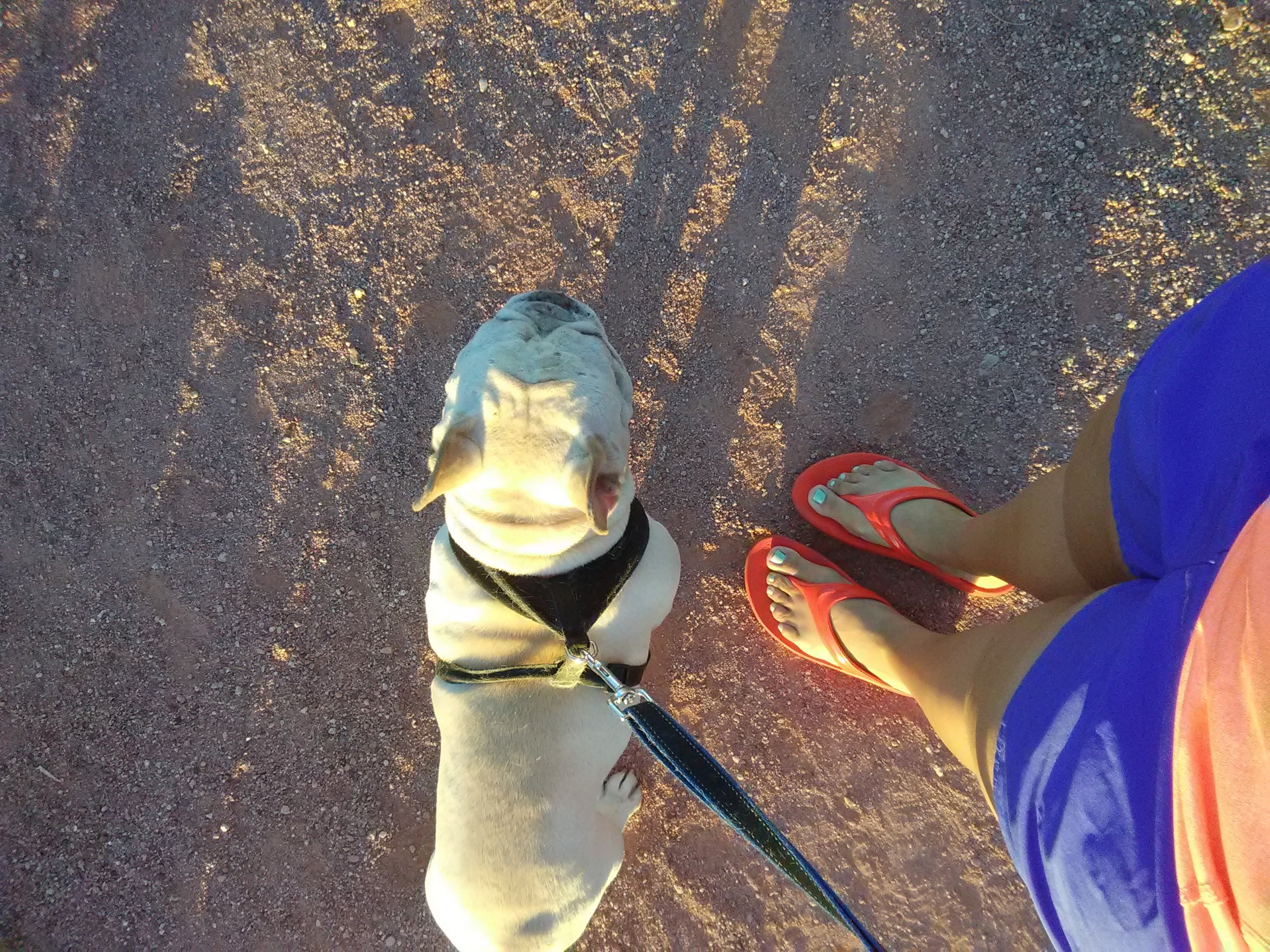 I quickly slide on my OOfos OOlala's then take my doggie out for morning walks. Photo by Andrea Heser