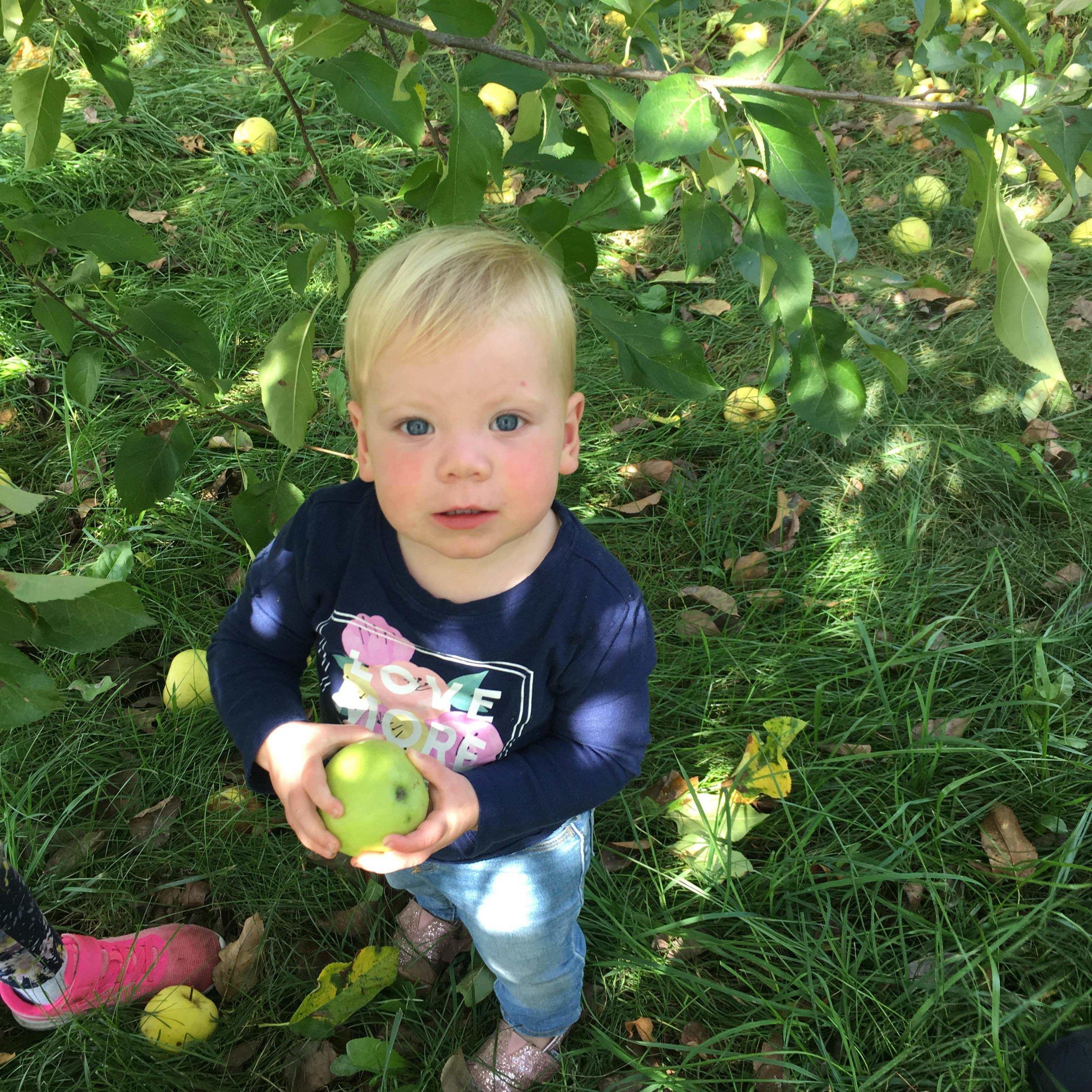 apple8.jpg