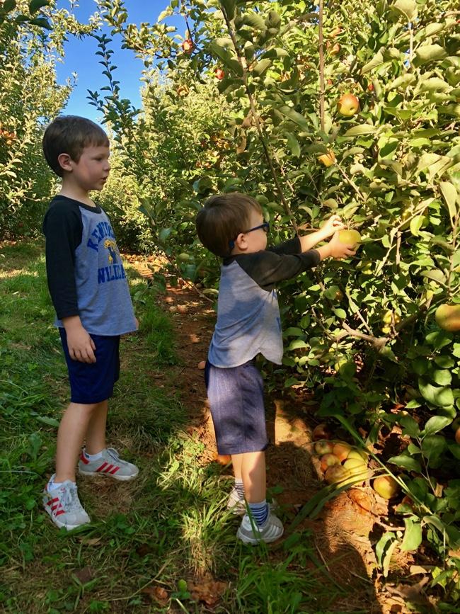 Picking Apples Min.jpg