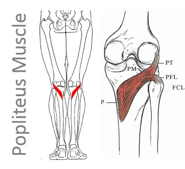 Illustration source:http://www.regenexx.com