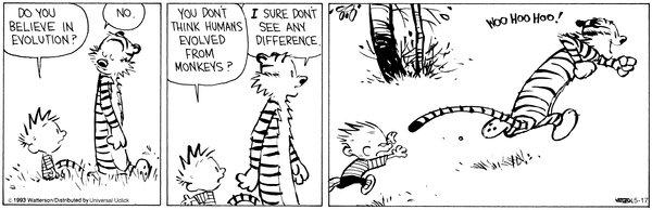 Calvin Evolution
