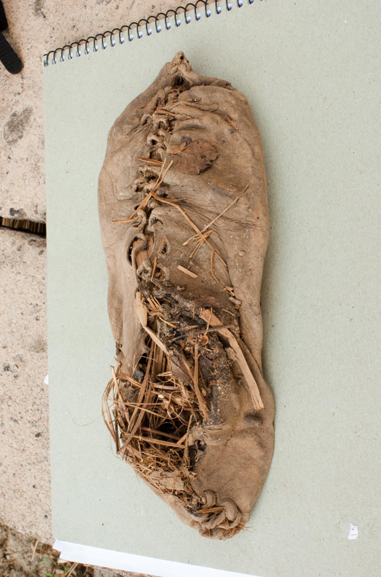 The world's oldest known leather shoe (pictured) has been found in an Armenian cave date back to 5,500 years, archaeologists say. (source:  National Geographic )