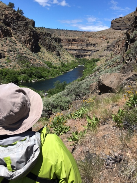 After we finally started moving again ... a view down the canyon at fading balsamroots and lots of sagebrush, thinleaf alders, mock-orange, elderberries, and more.