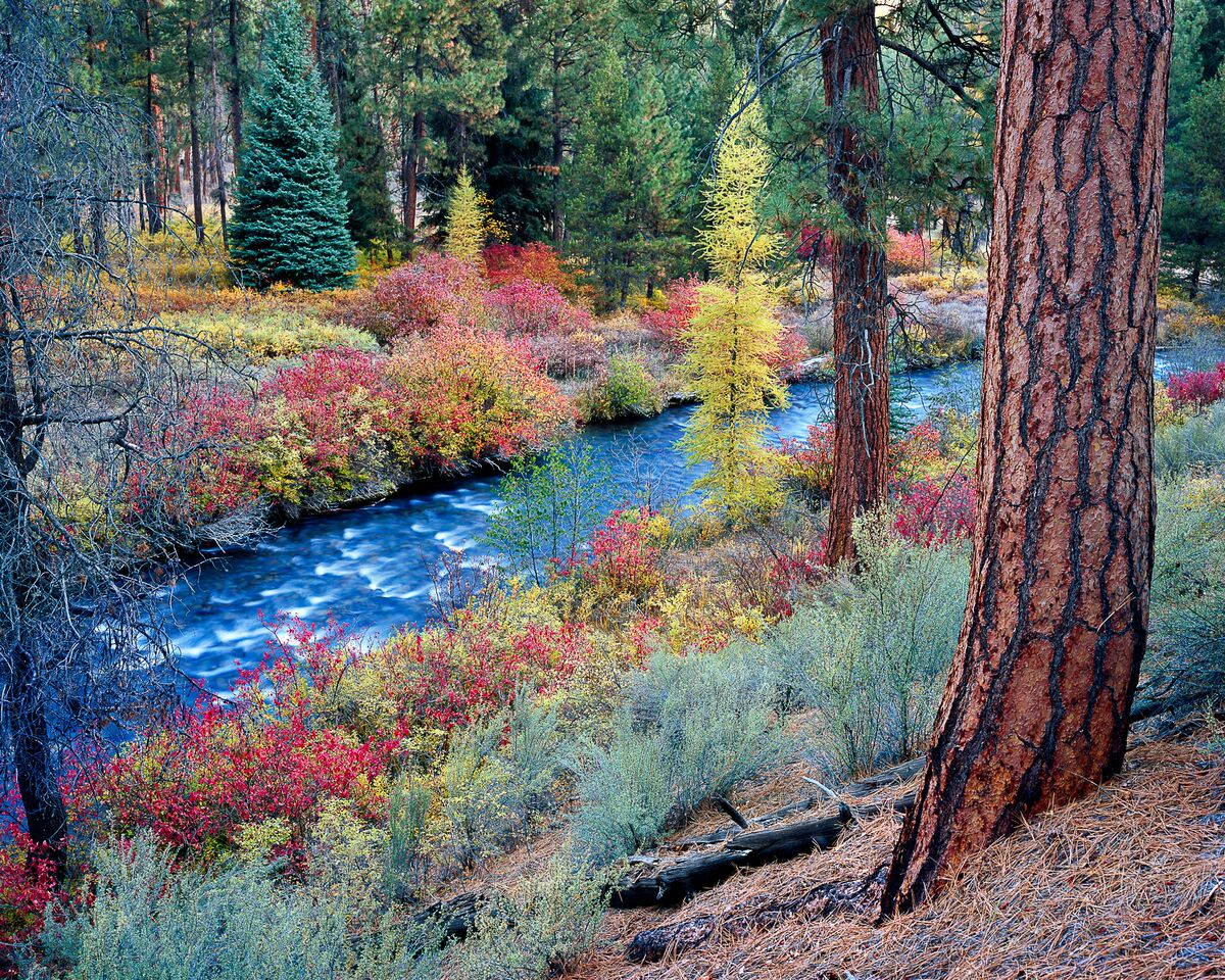 Shevlin Park in fall. Photo: Mike Putnam