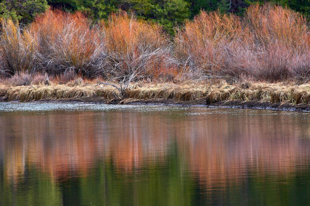 Willows nearing winter. Photo by Kim Elton