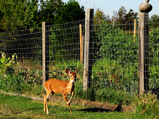 Yep, big fences really work.Photo by www.democraticunderground.com