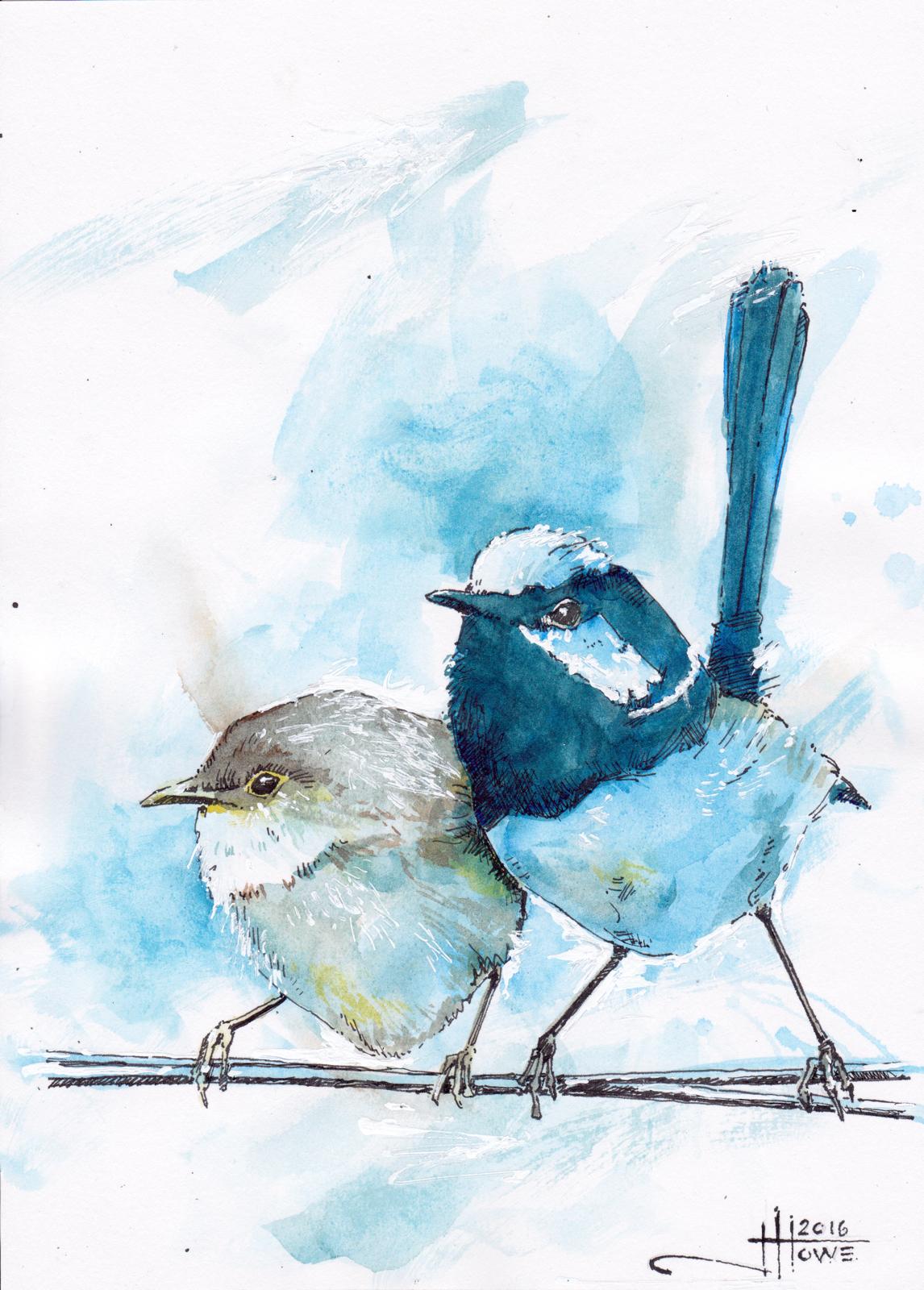 SUPERB FAIRY WREN  watercolour