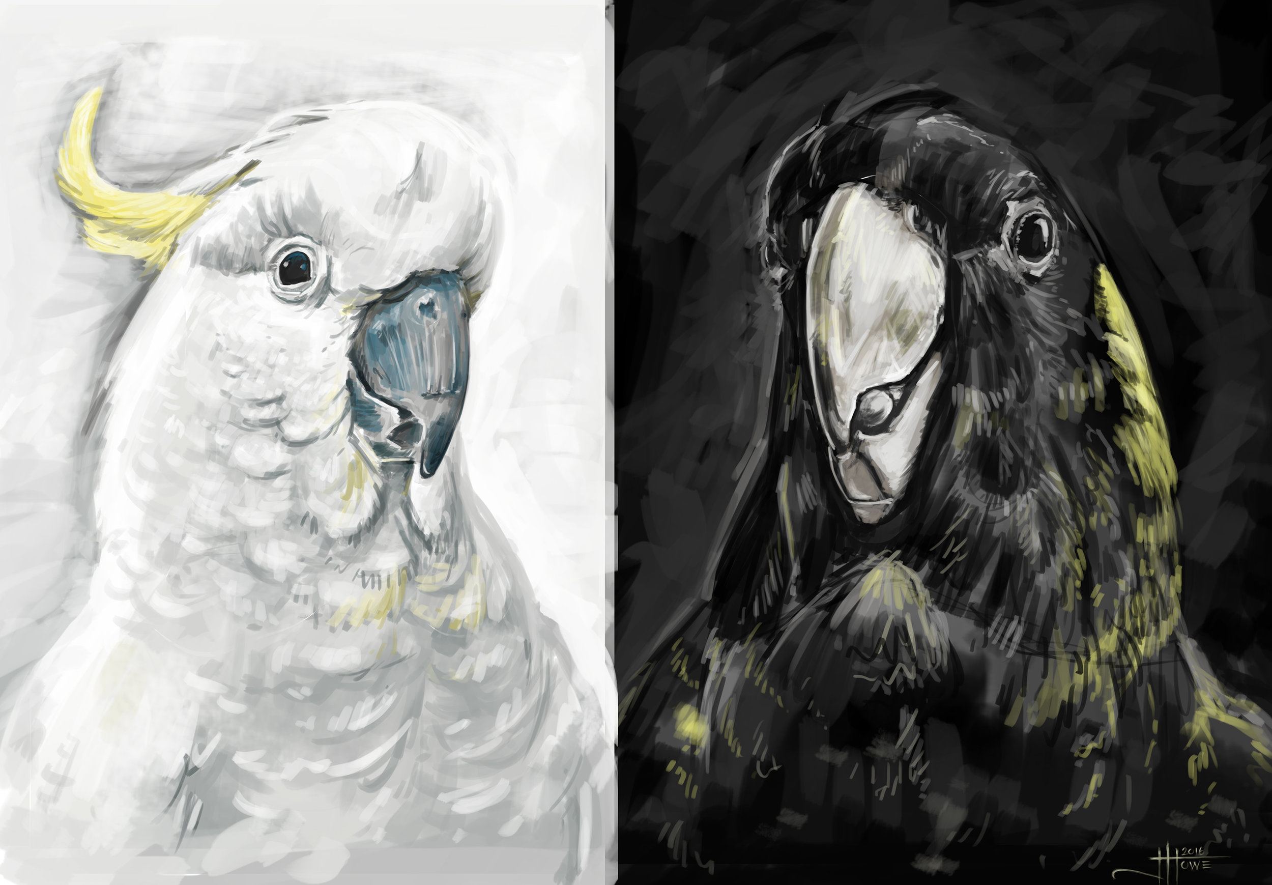 THE WHITE AND BLACK COCKATOO   photoshop