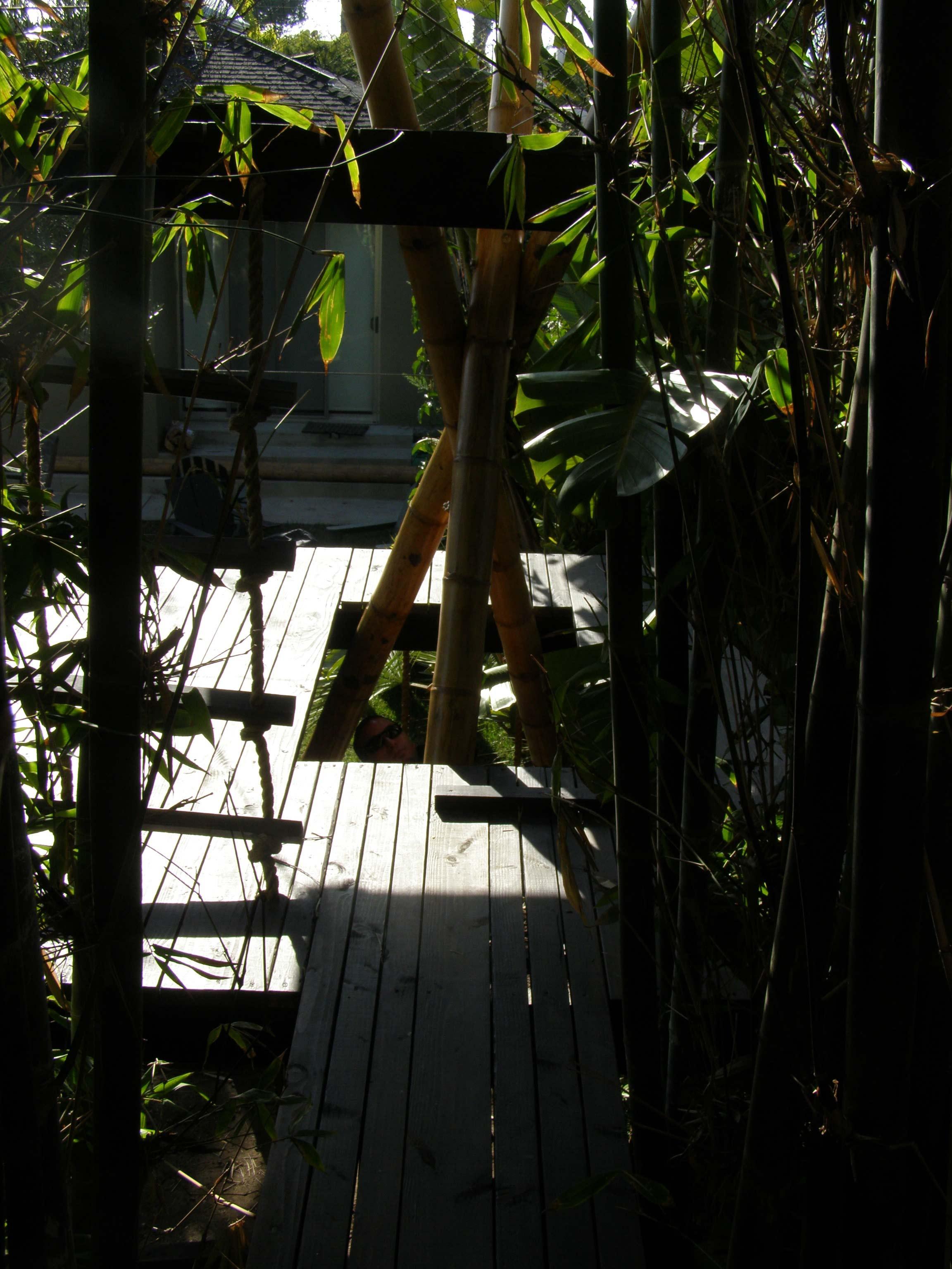 BambooPlay-CatWalkOut.jpg