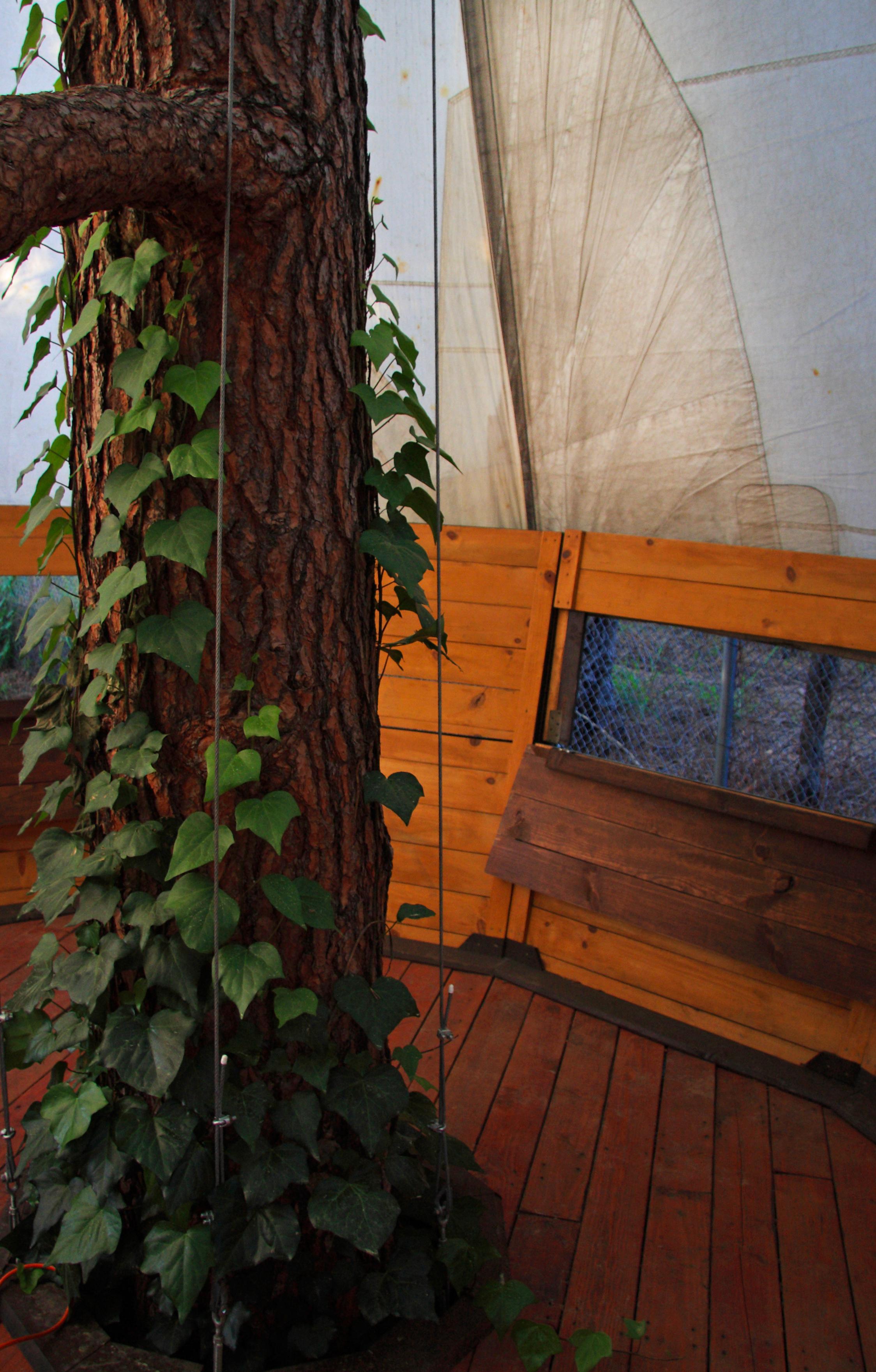 TreePi-Trunkw:Window.JPG