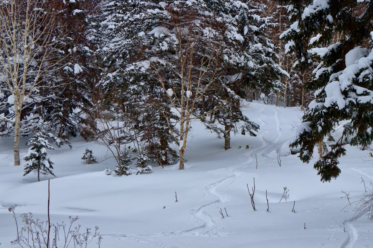 Untouched powder accessible from the back door.