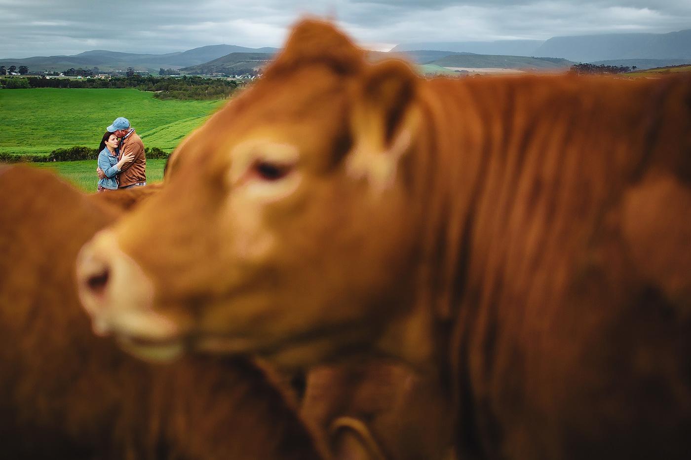 Farm Engagement Shoot - Henri & Anzette