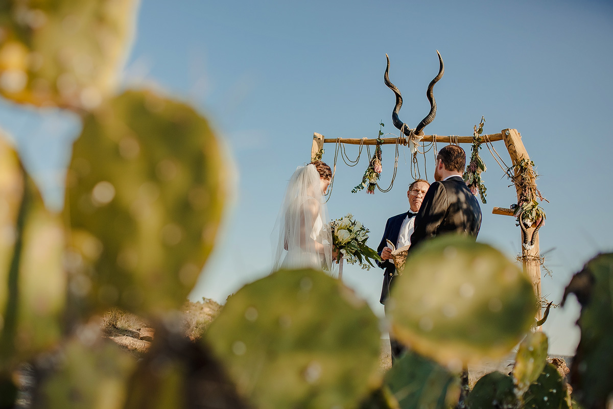 Cactus in foreground at South African Destination Wedding.