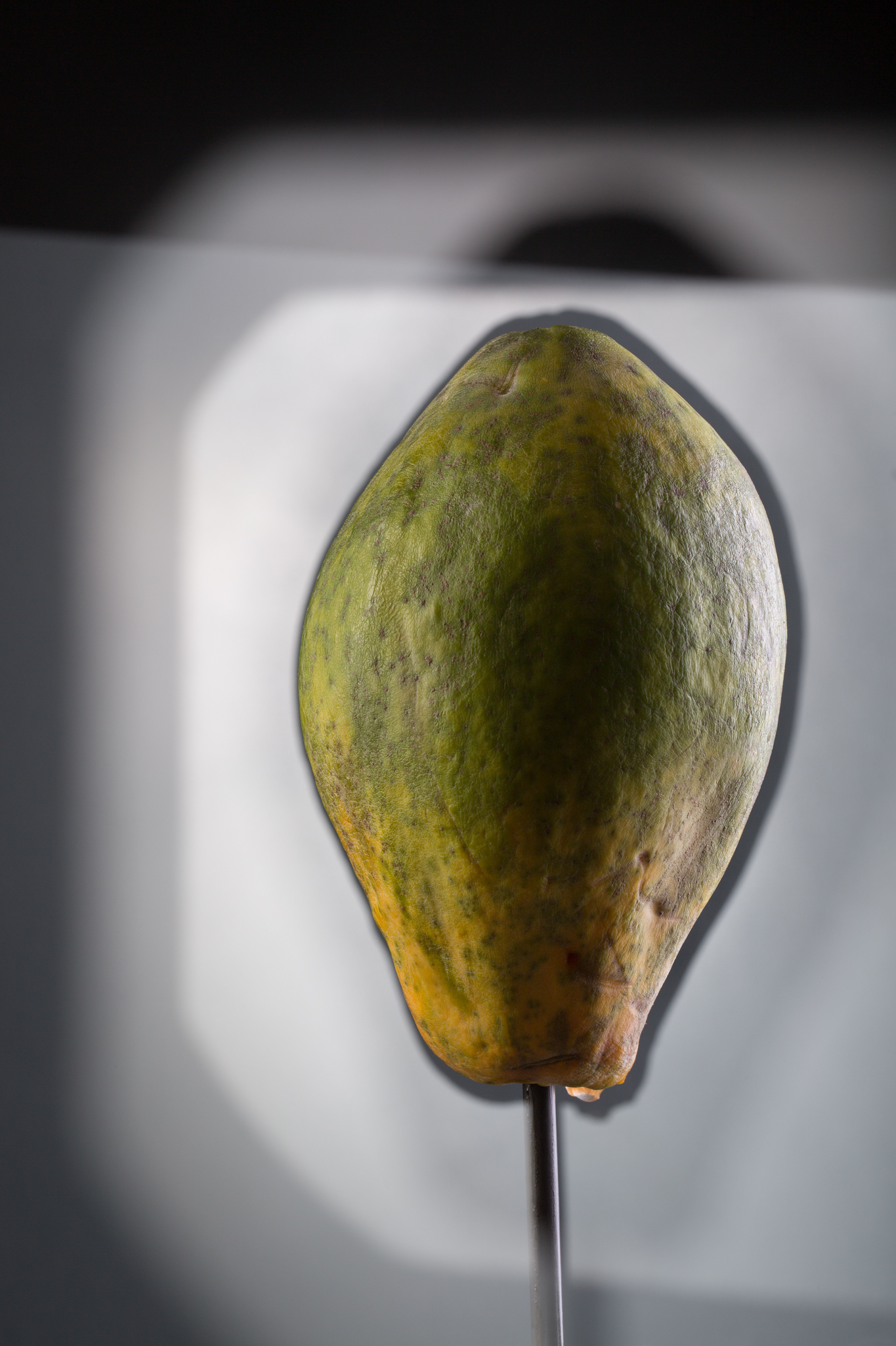 2019_06_05 papaya 002 final 2048.jpg