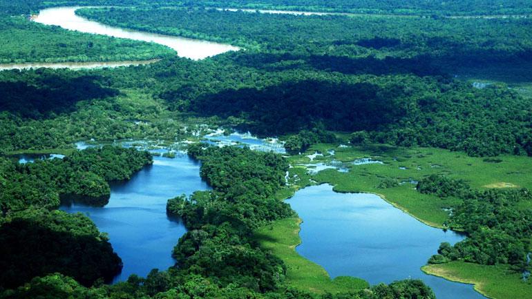 rainforest_colombia.jpg