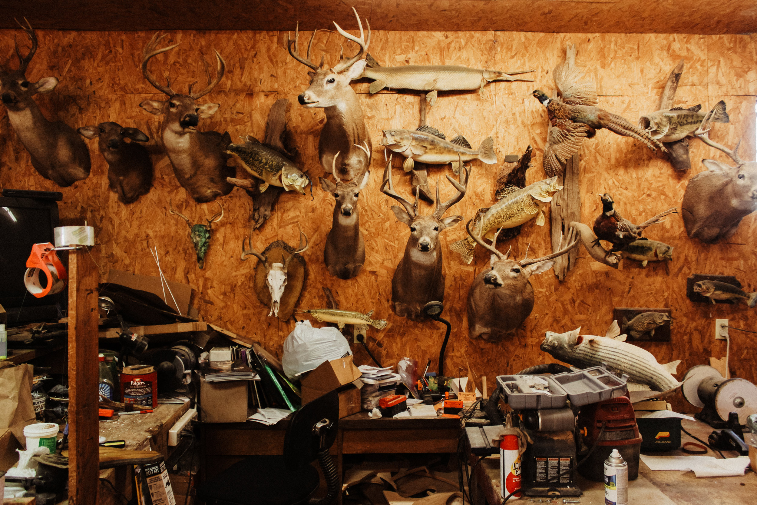 A wall in Sherman Johnson's taxidermy workshop.
