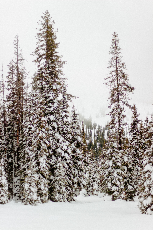 Montana-98.jpg