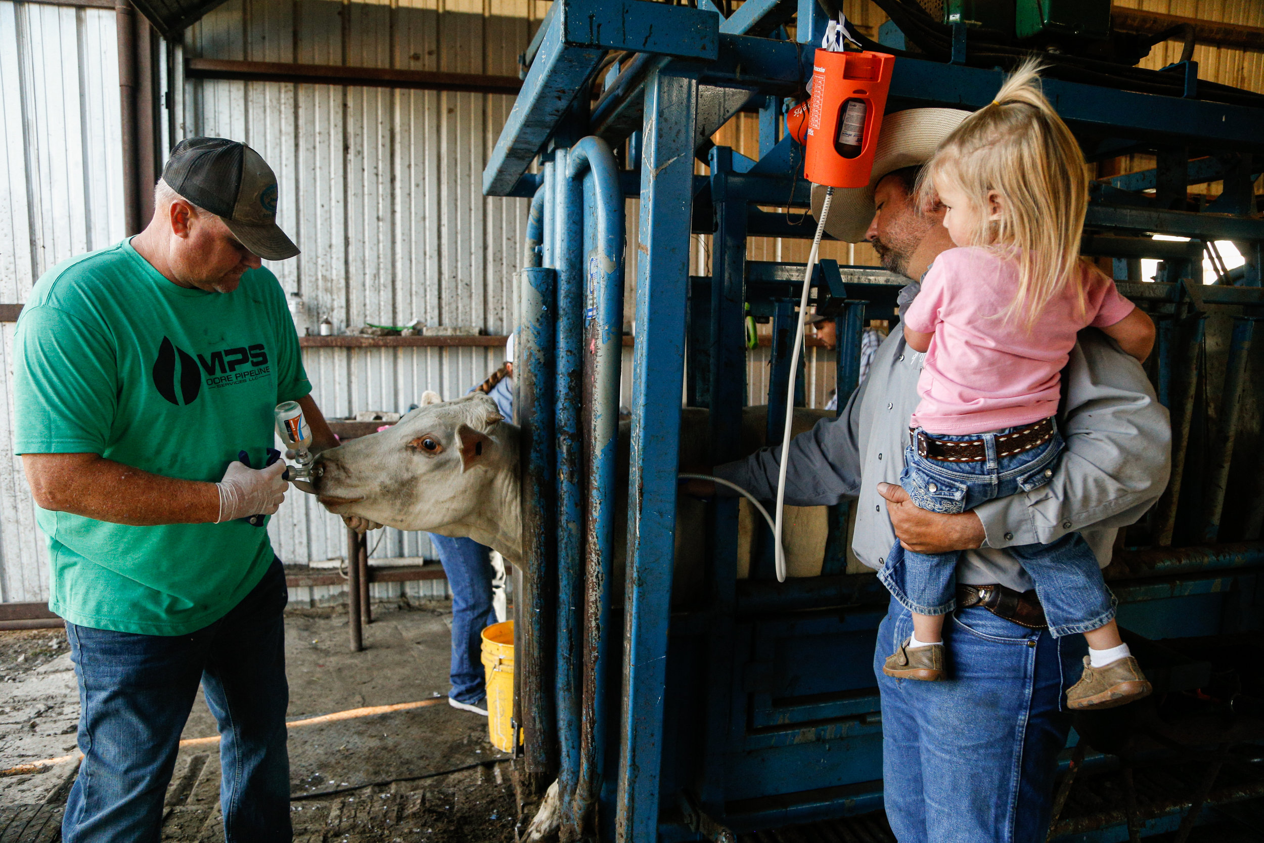 Shane and Jenna Stierwalt process a new shipment of cattle at Stierwalt Ranch in Burbank on July 27, 2019.