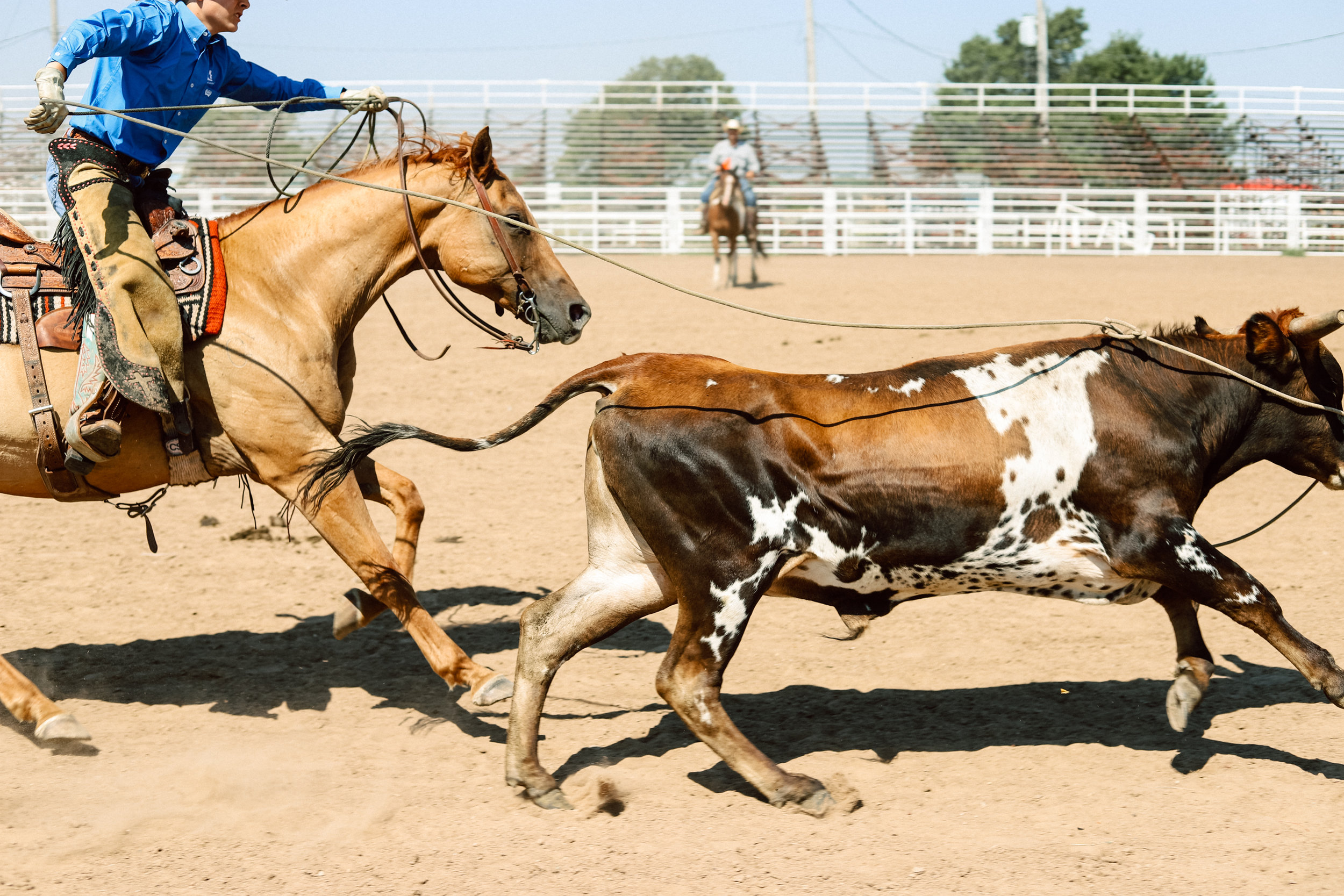 A rider competes in a cattle roping event during the youth ranch rodeo at the 101 Arena in Ponca City, Oklahoma on July 27, 2019.