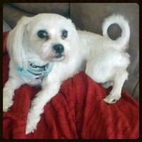 Rocco loves The Kritter Sitter!