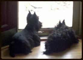 Brock & Sage at the window...