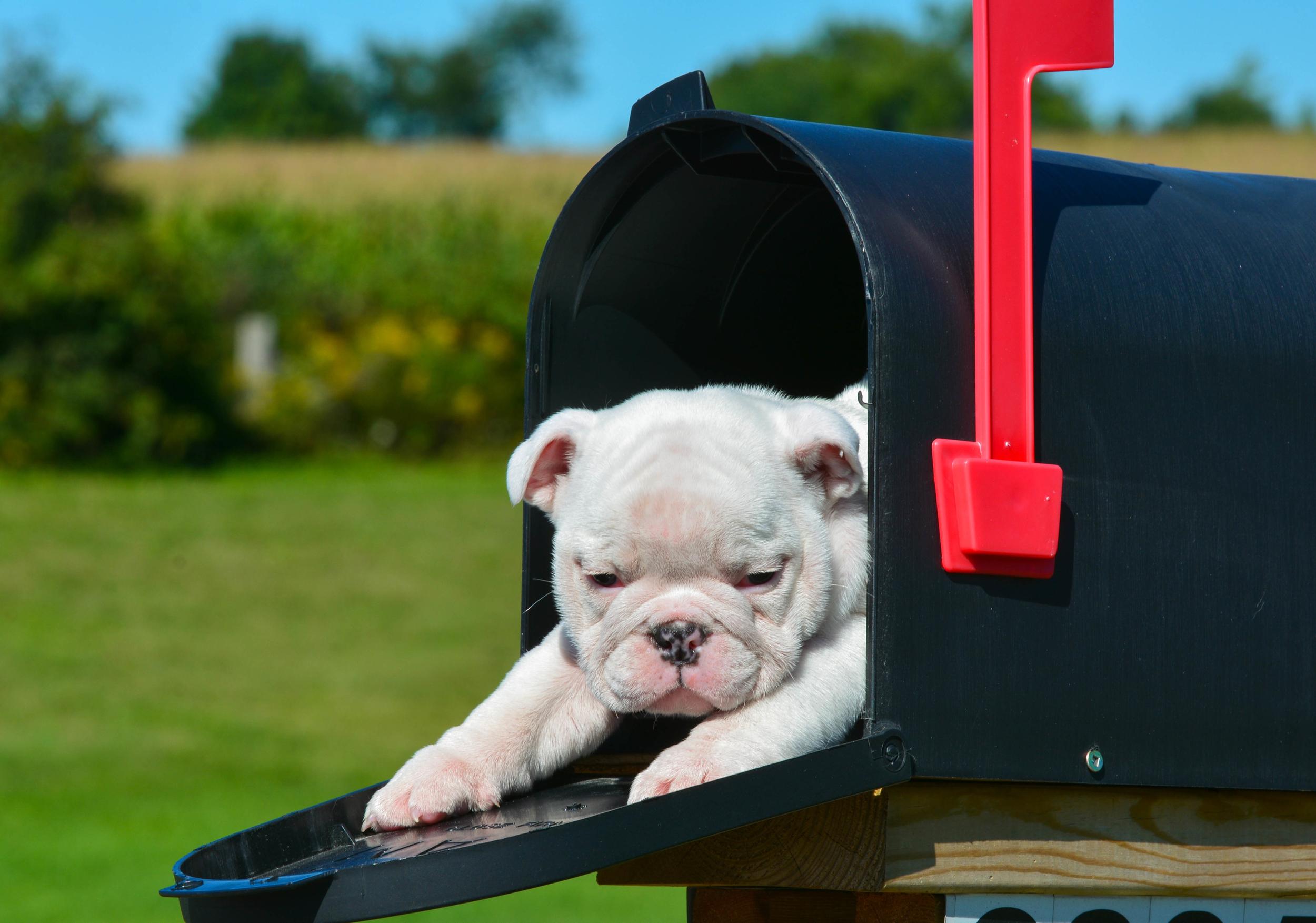 mailbox with puppy.jpg