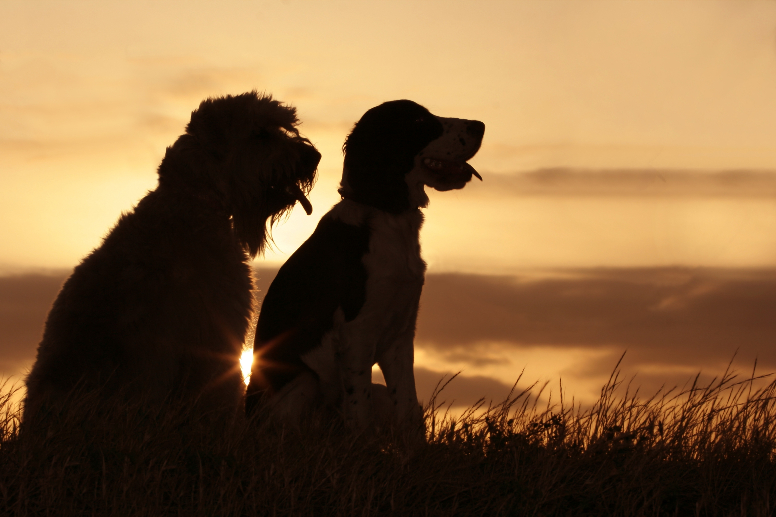 friends at sunset.jpg