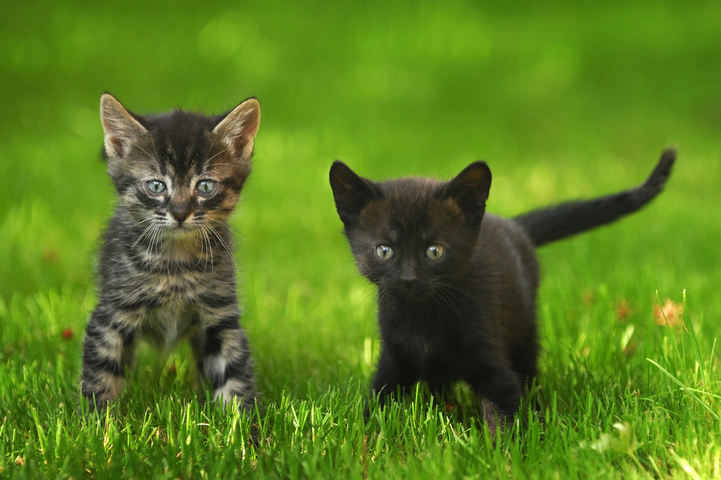 two kittens.jpg